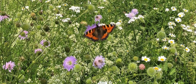 Bee-Deal – Ein Naturgarten für Bienen und Insekten