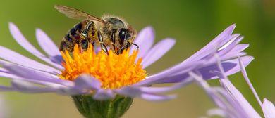 """Ausstellungseröffnung """"Die Wunderwelt der Bienen"""""""