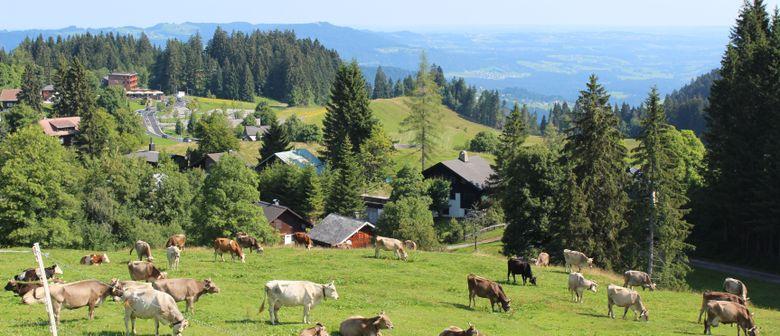 Alpführung Alpe Oberlose und Käsknöpflepartie in der Meierei