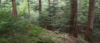 Informativer Spaziergang entlang dem Wald-Wissen-Weg