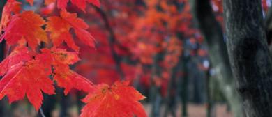 u:japan lectures s03e01- Yola Gloaguen