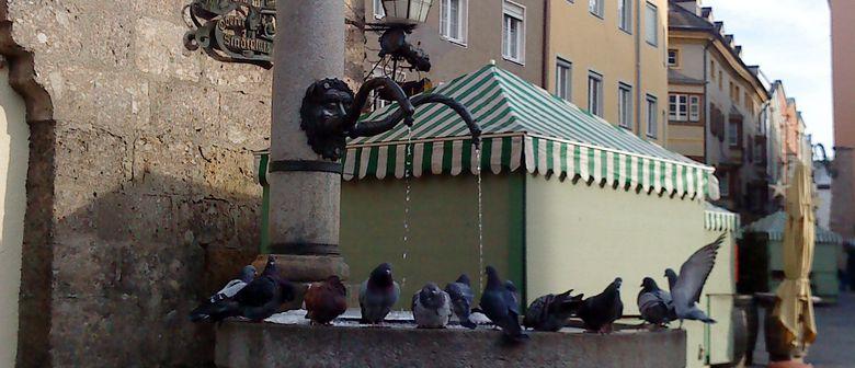 Vögel beherrschen die Stadt