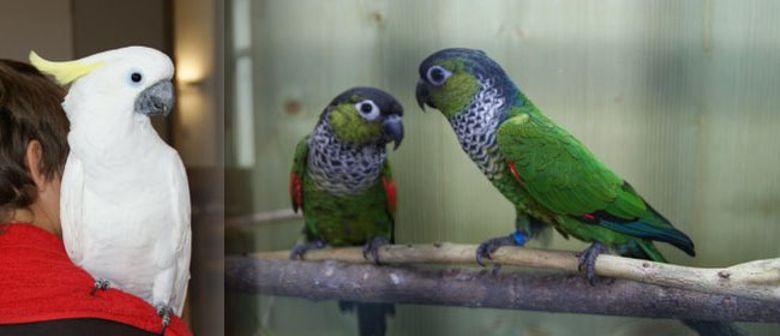 Vogelzuchtausstellung