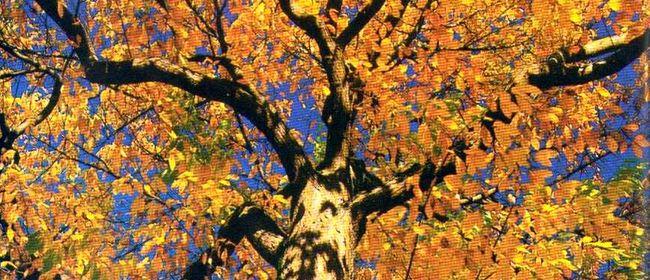 Bruder Baum - Tanztag